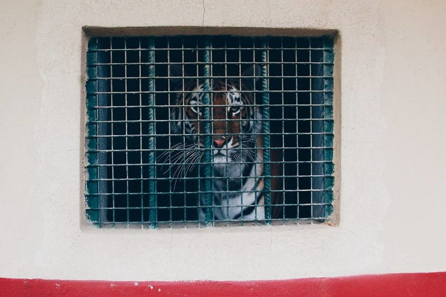 I Made This Project To Show That The Zoos Are Prison