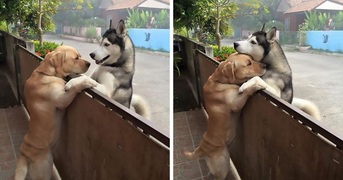 This Dog Felt So Lonely That He Escaped The Yard To Hug His Best Friend