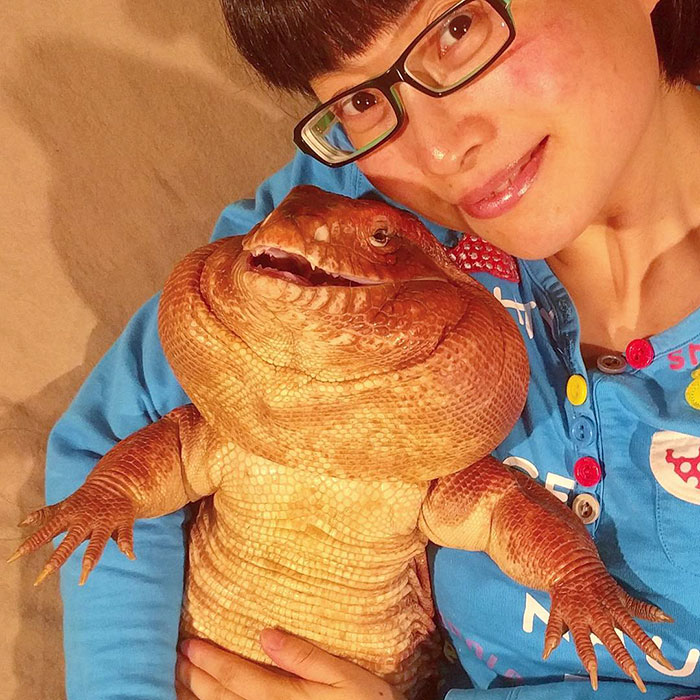 This Dog-Sized Lizard Is Instagram's Latest Four-Legged Sensation, And His Pics Will Make Your Day