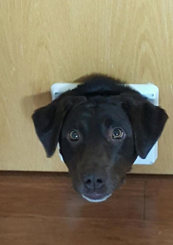 Installed A Cat Door. Received Dog