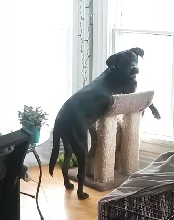 My Dog Thinks That He Is A Cat