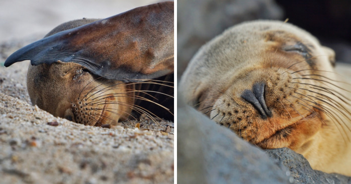 I Photographed Sea Lions In The Galápagos And Theres A Reason