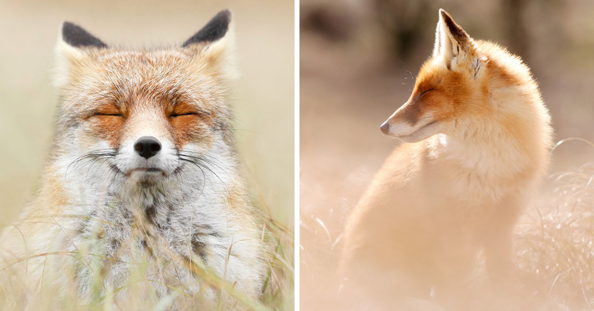 15 Mindful Foxes By Roeselien Raimond That Teach Us How To Master Life