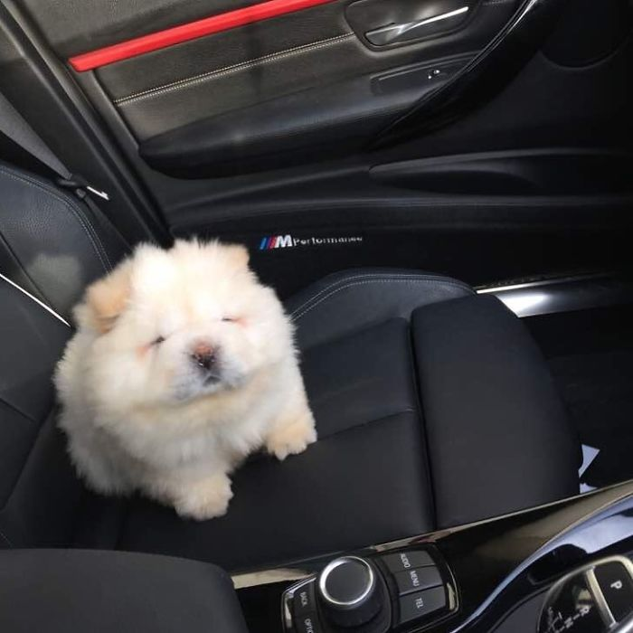 How To Get Puppy Home In Car