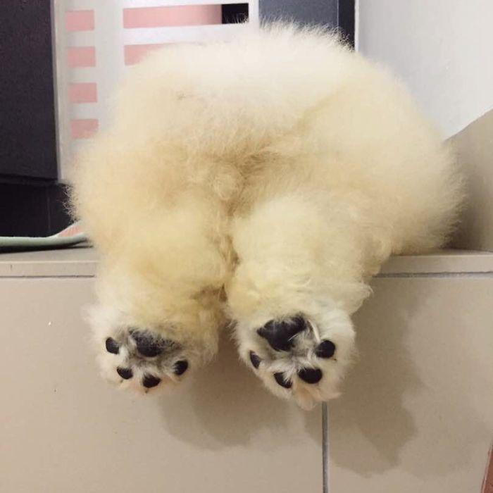 Cute Fluffy Dog Breeds
