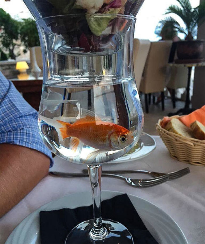 More Prawn Cocktail Served In A Glass Is Fine. Prawn Cocktail Served In A Glass On Top Of A Live Goldfish Is Not
