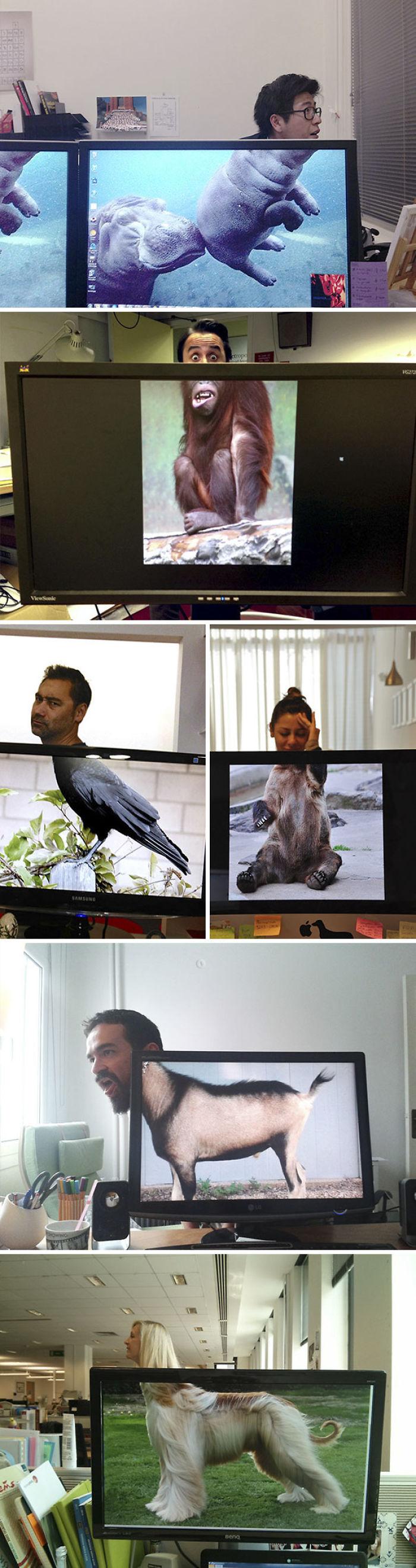Safari de oficina