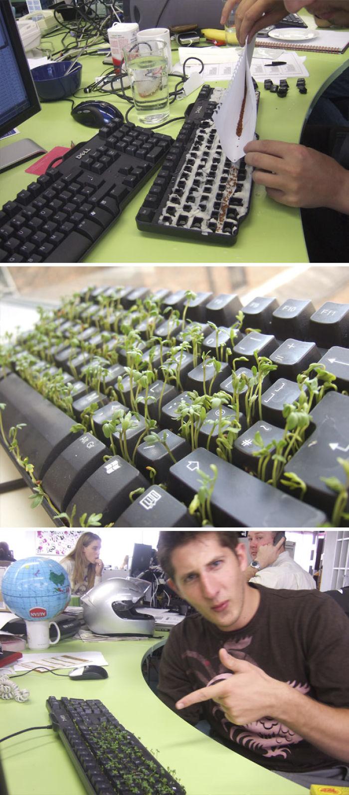 Grass Keyboard Prank