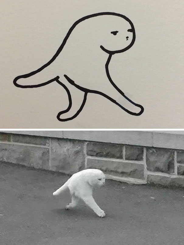 cat can do
