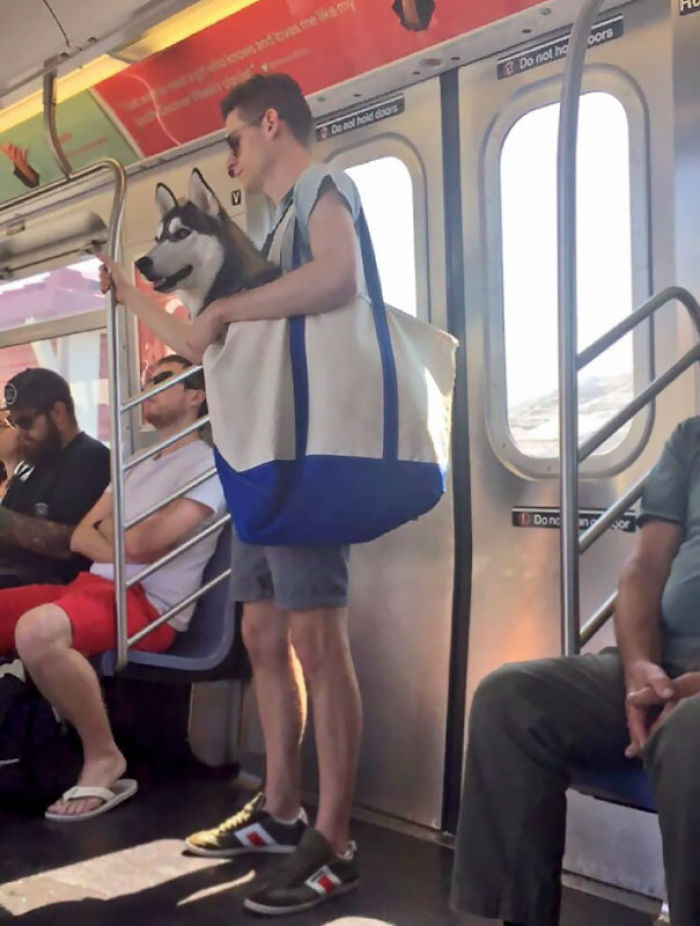 No se permiten a los perros en el metro de Nueva York, salvo que sean transportados, así que...