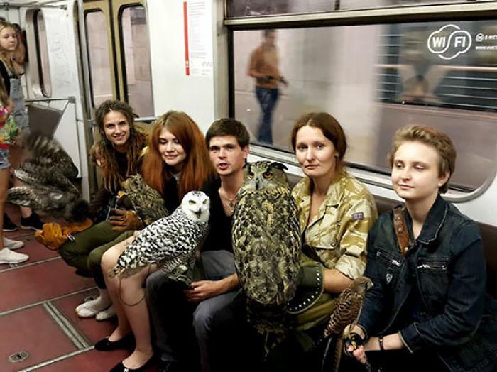 Búhos en el metro de Moscú