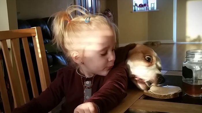 Clever Dog Uses Distraction Tactics To Steal Food