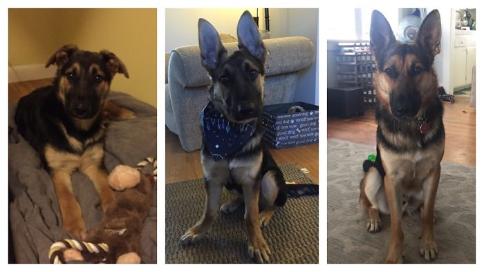 4 Months, 6 Months, 1.5 Years