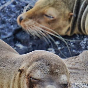 My Photographs Of Sea Lions From My Week In The Galápagos