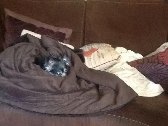 My Dog Ralphie, 1999-2017