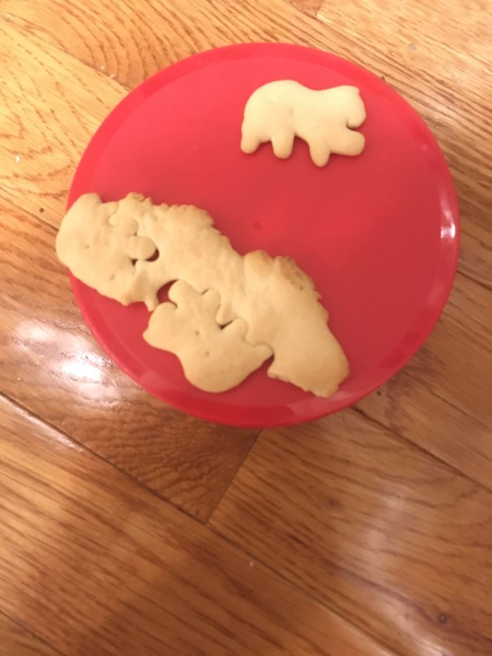 This Animal Cracker. What Kind Of Breeder Is Responsible For This?