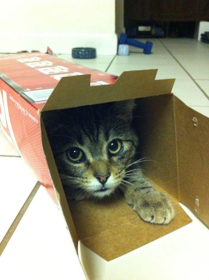 Since He Was A Kitten...