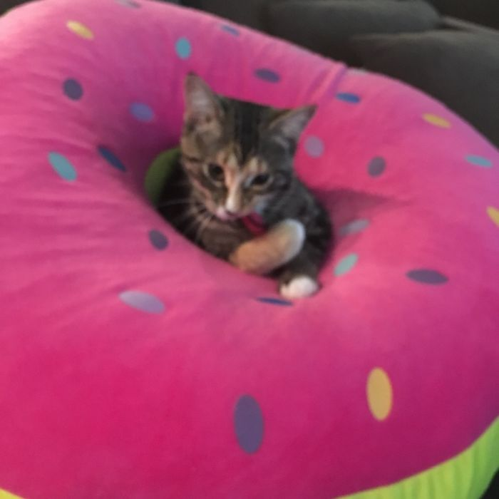 Millie In A Donut Hole