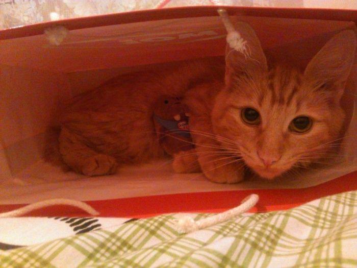 Kira In A Gift Bag