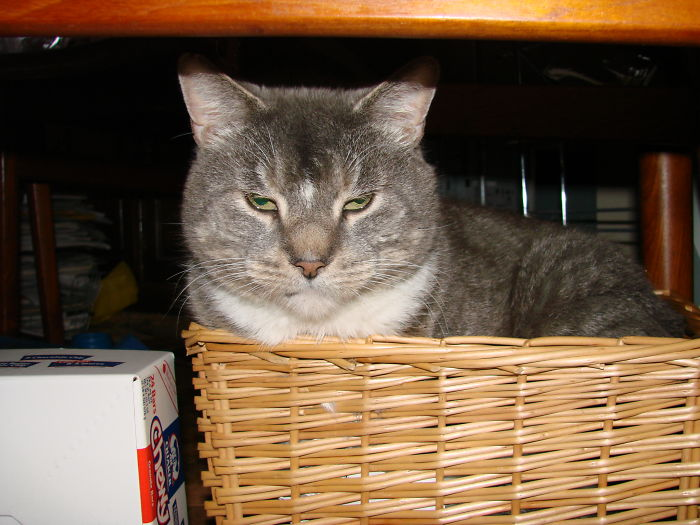 Kitty In A Basket