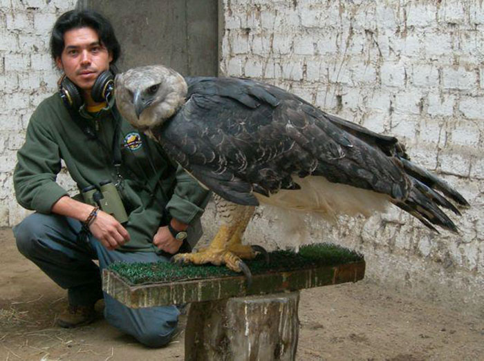 This GIANT Bird Is One Of The Largest In The World, And You Wouldn't Want To Mess With It