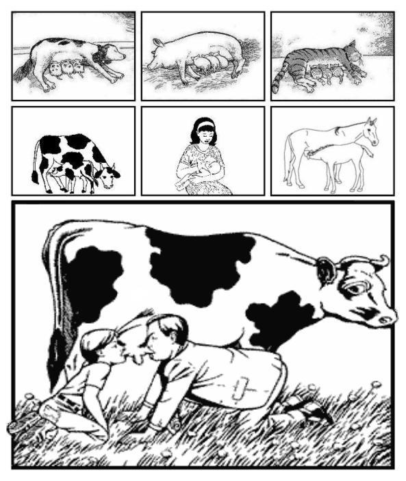 milk-mleko-mozaika-59762f5f000ee.jpg