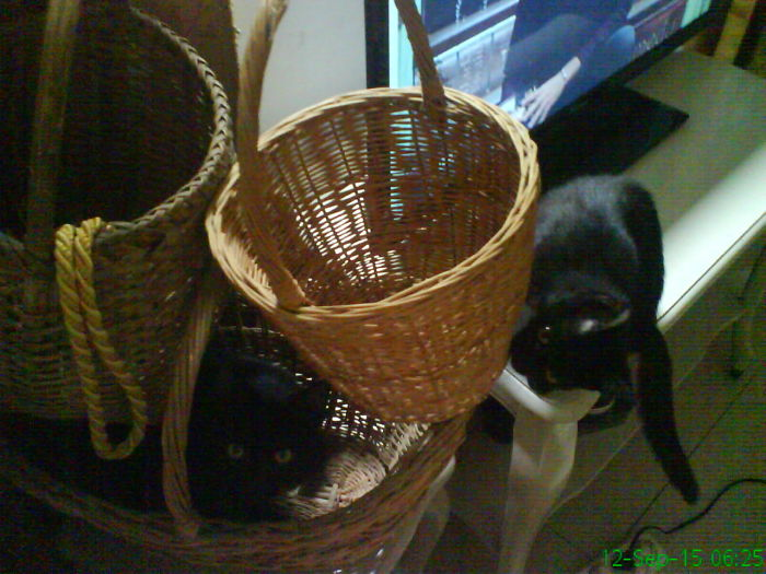 My Adopted Pets…
