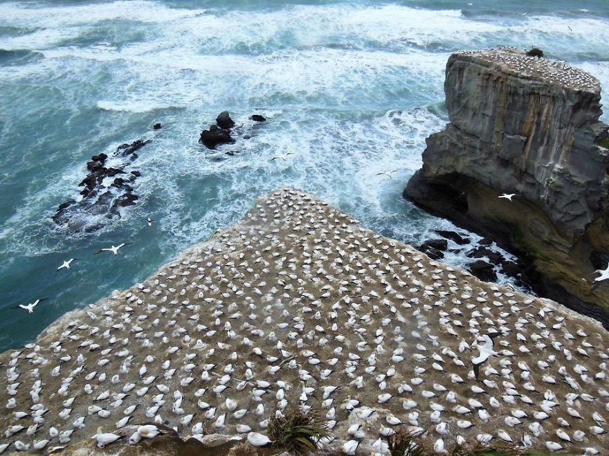 Thousand Seabirds