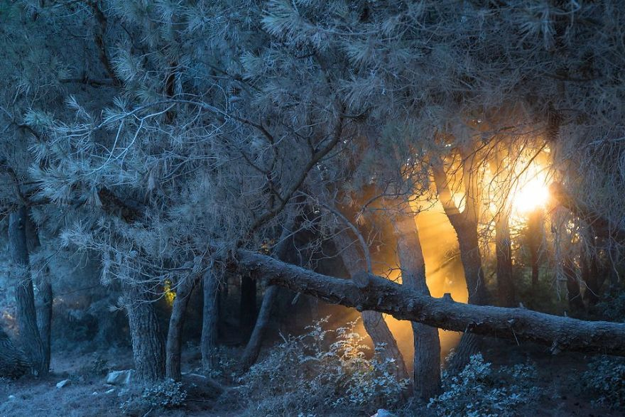 Fire In The White Forest