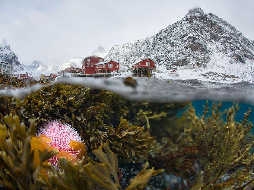 Underwater View Of The Winter Lofoten