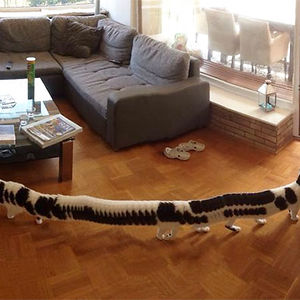 I Took A Panoramic Picture Of Our Living Room. But My Cat Decided To Walk Through