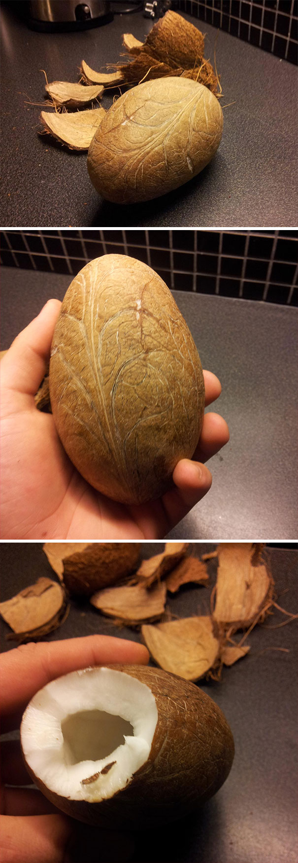 So, I Just Peeled A Coconut Without Breaking It