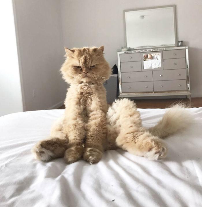 Esta mañana me desperté y vi al gato así