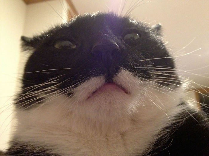 Ahora cada mañana me despierto así desde que mi novia trajo a su gato