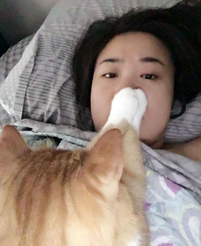 Cuando te despiertas porque tu gato intenta darte el sueño eterno