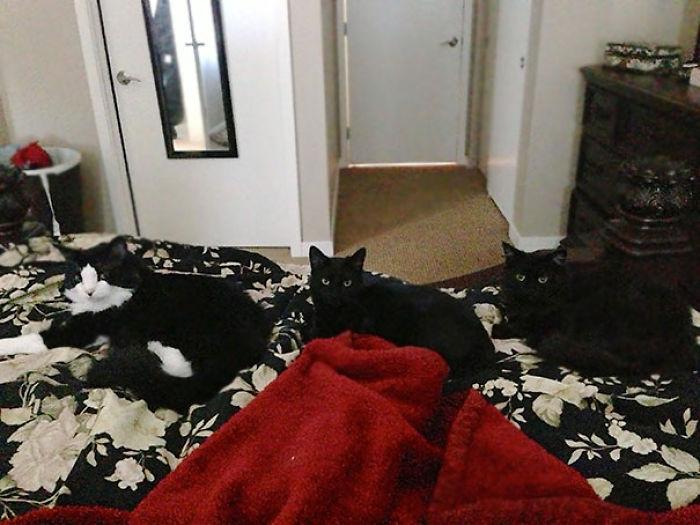 Normalmente me despierto a las 9 para dar de comer a los gatos. Hoy me desperté a las 10