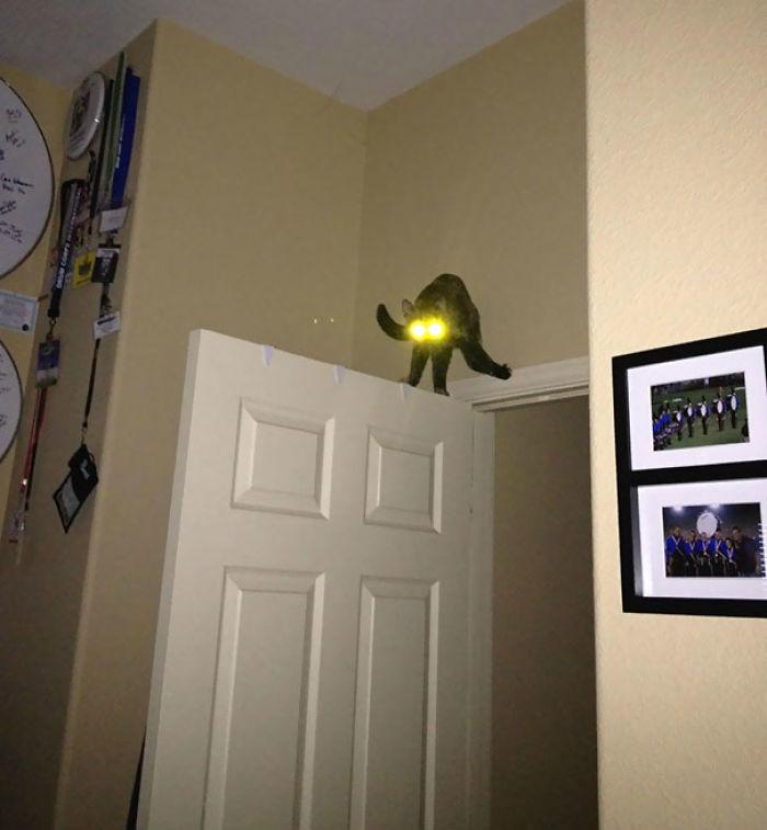 Me despertó mi gato que se había vuelto loco