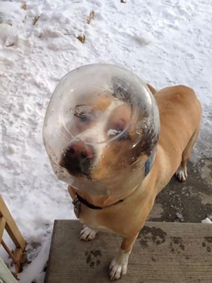 Me despertó alguien llamando a la puerta. Era el perro