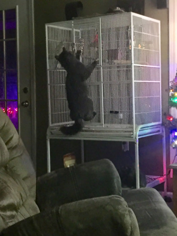 """Was Woke Up By My Parrot Saying """"Help Me Help Me"""" Which Is What He's Says When He Gets His Foot Tangled In His Toy, Wasn't Expecting This"""
