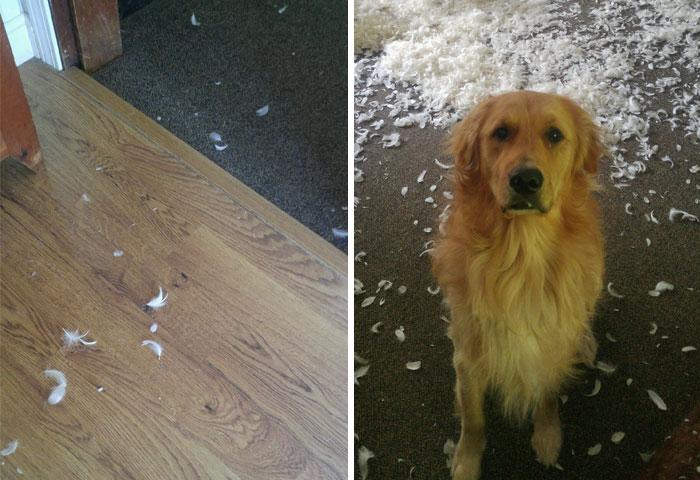 """10+ Divertidos momentos """"Me desperté y vi esto"""" que les han ocurrido a dueños de mascotas"""