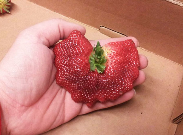Multiple Strawberries Fused Into One