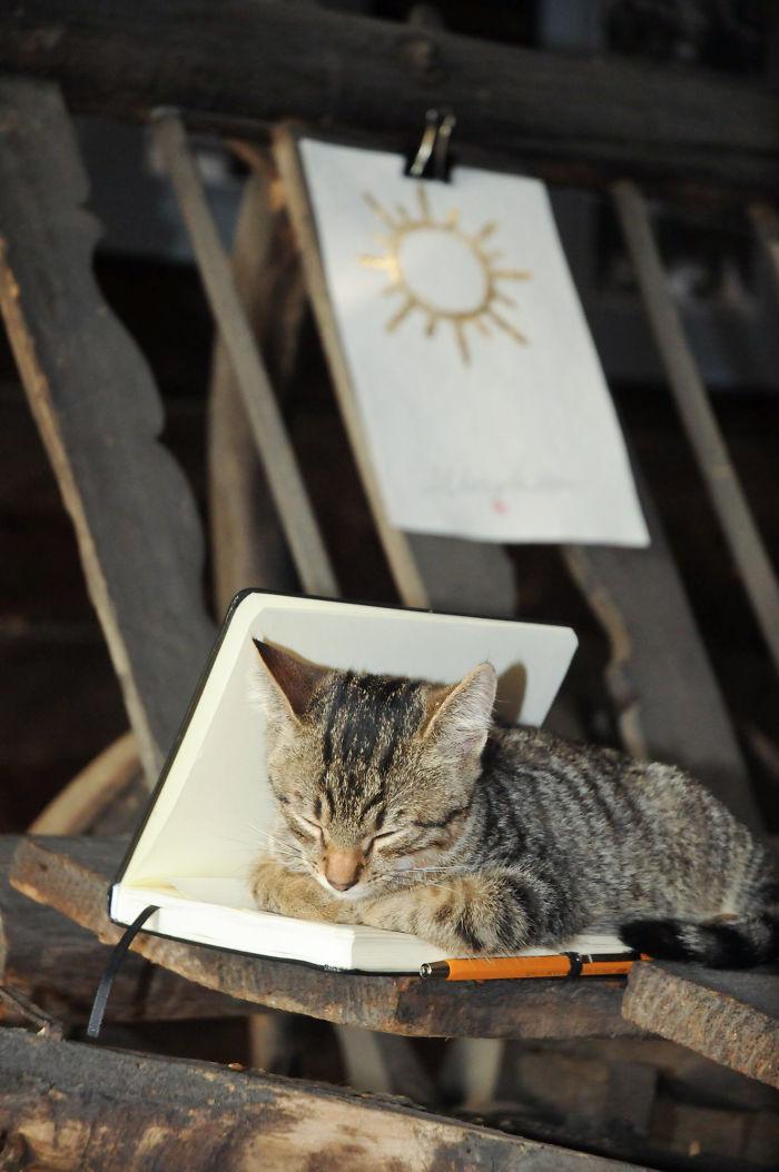 A Little Cat Sleeping In My Sketchbook