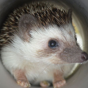 P. Pricklepants