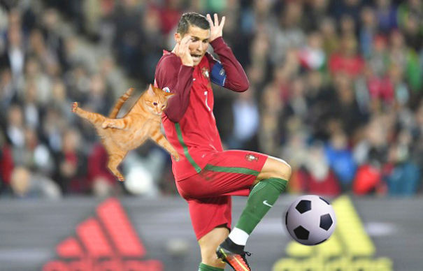 Ronaldo Vs Cat! Who Will Win?
