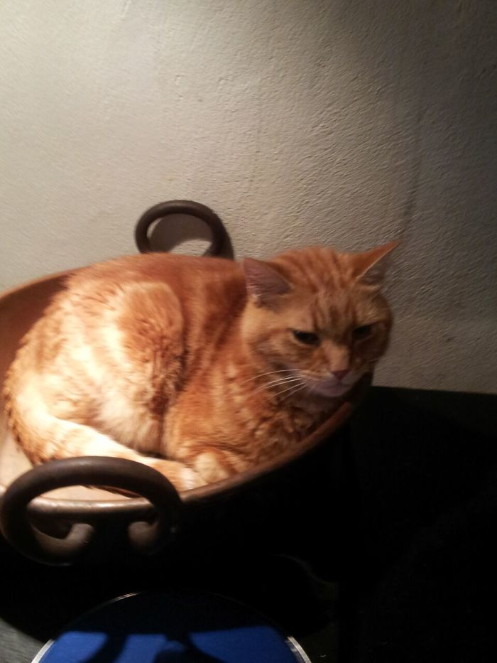Rufus In A Bowl