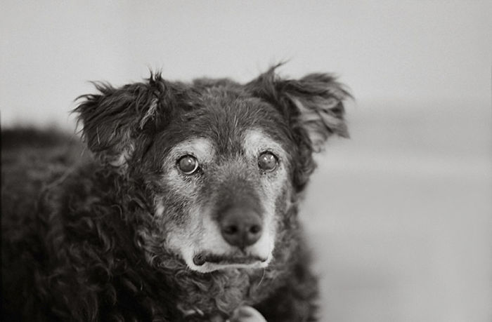 Curley, 14 Years Old, Kanab, Utah, Best Friends Animal Society