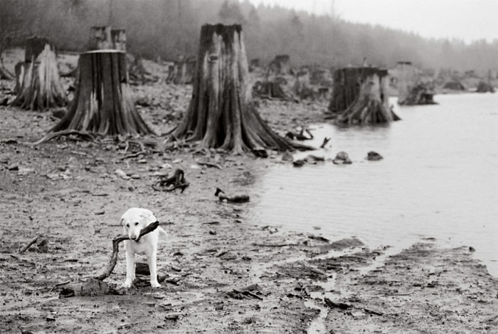 Hank, 13 Years Old Rattlesnake Lake, Washington