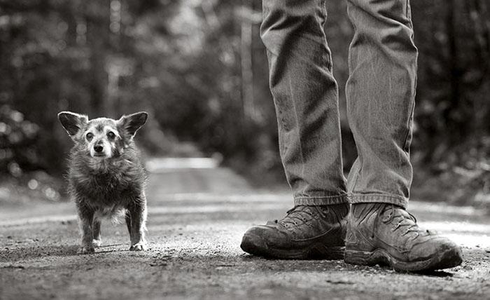10+ Old Souls Of Elderly Dogs Captured By Nancy LeVine