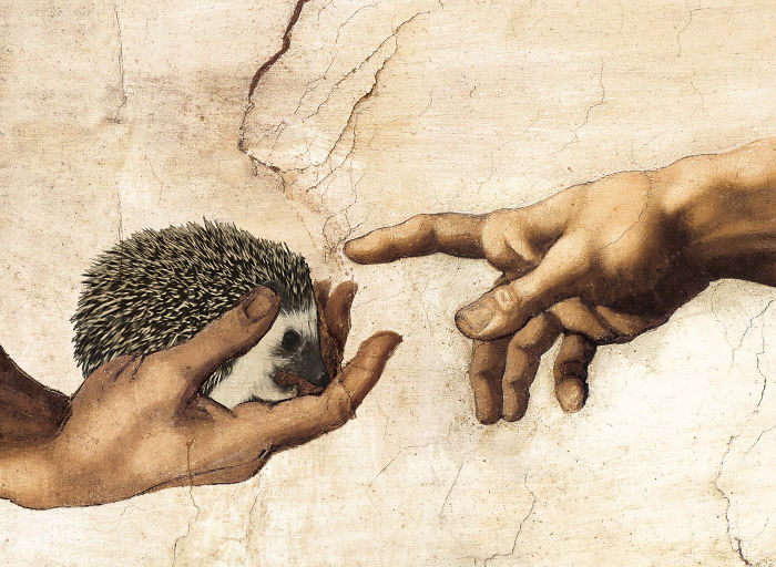 Michelangelo's Hedgehog