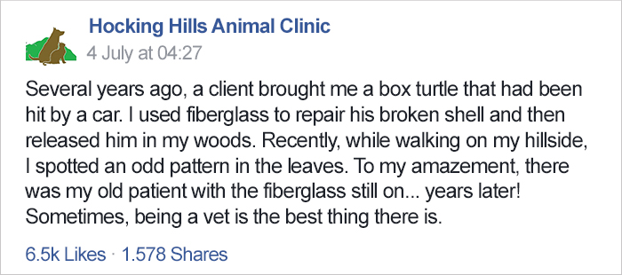 turtle-shell-repair-vet-reunited-old-patient-hocking-hills-animal-clinic-1 (2)